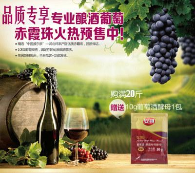 【预售】酿酒鲜葡萄 赤霞珠10kg 可自酿葡萄酒(送葡萄酒酵母10g,仅支持自提,预计提货时间:10月15日)